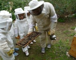 Sortie abeilles (1)