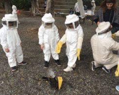 Sortie abeilles (10)