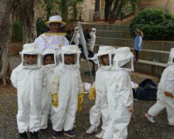 Sortie abeilles (16)
