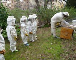 Sortie abeilles (18)
