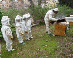Sortie abeilles (19)