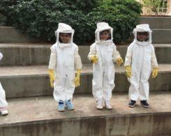 Sortie abeilles (8)