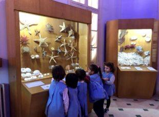 MS Musee de la mer (5)